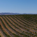 Eberle Winery vineyard pano